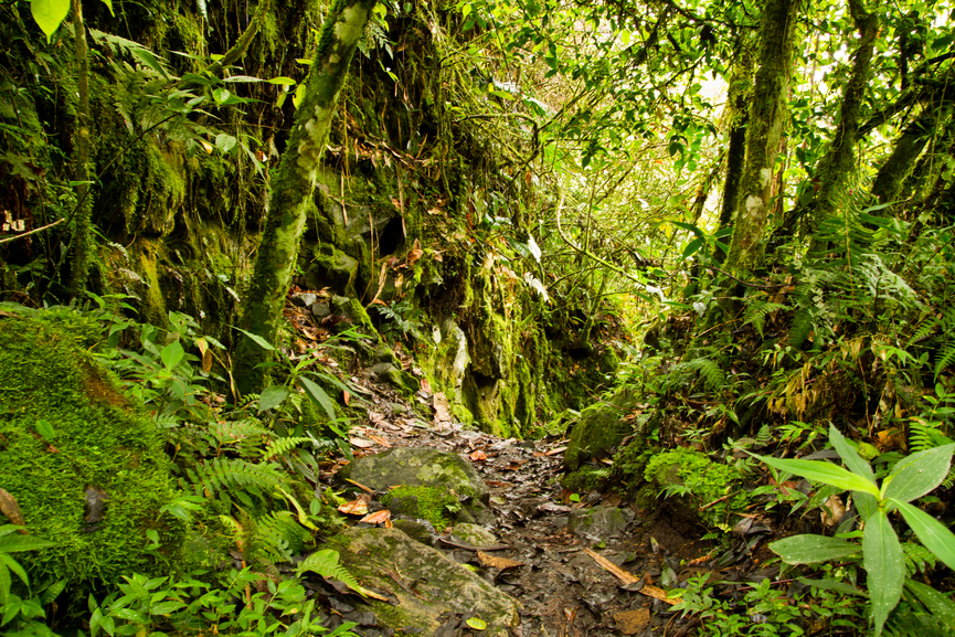 Amazon Flora