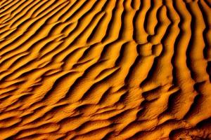 amazon desert